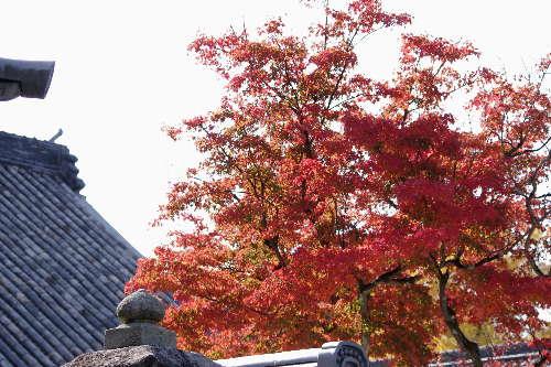 太宰府光明寺の紅葉 1
