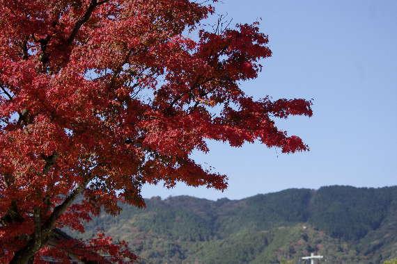 太宰府光明寺の紅葉 2
