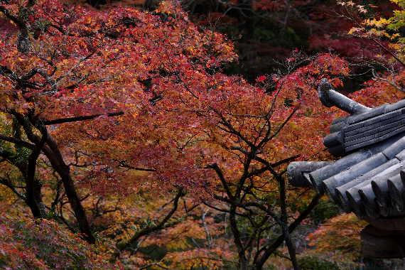 太宰府光明寺の紅葉 8