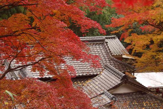 2012・最後の紅葉は永勝寺 5