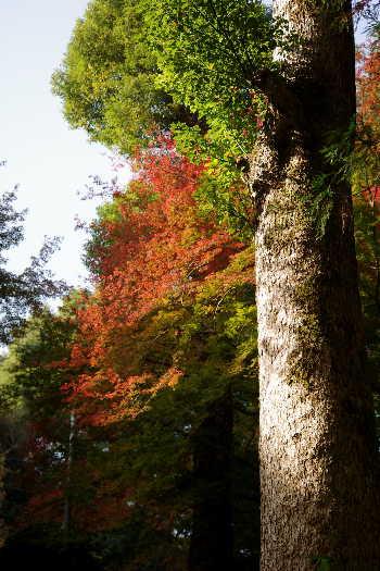 2012・最後の紅葉は永勝寺 3