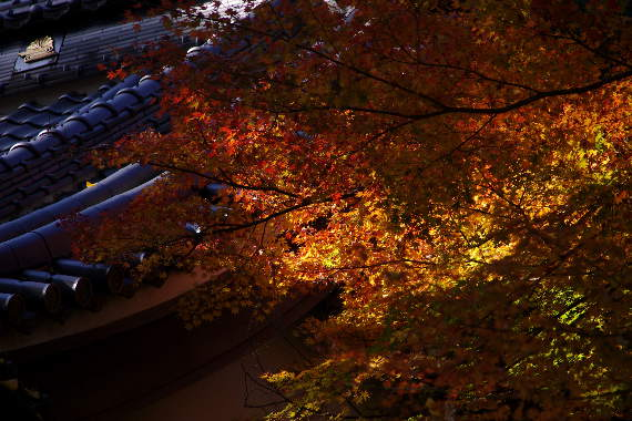 2012・最後の紅葉は永勝寺 10