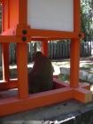 壷神神社09