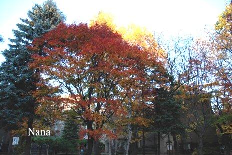 autumn1-1.jpg