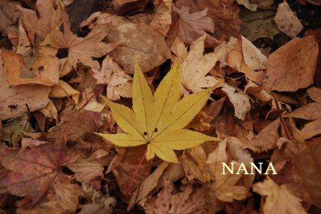 autumn1-10.jpg