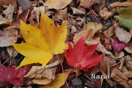 autumn1-2.jpg