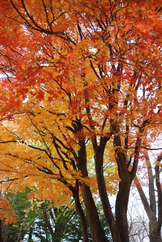 autumn1-6.jpg