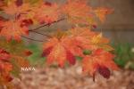 autumn1-7.jpg