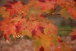 autumn1-8.jpg