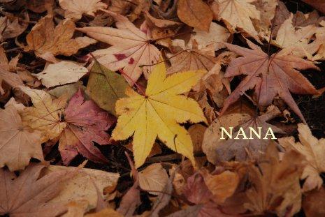 autumn1-9.jpg
