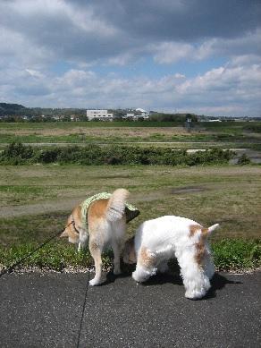 haruichiban.jpg