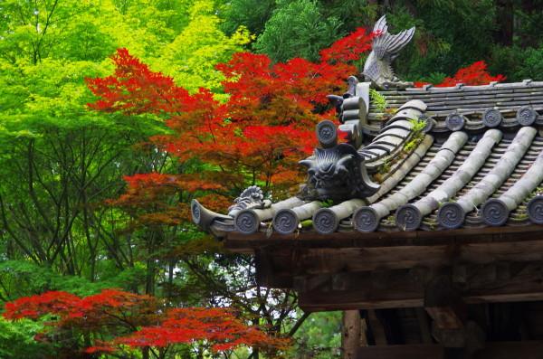 山門の新緑と紅葉1