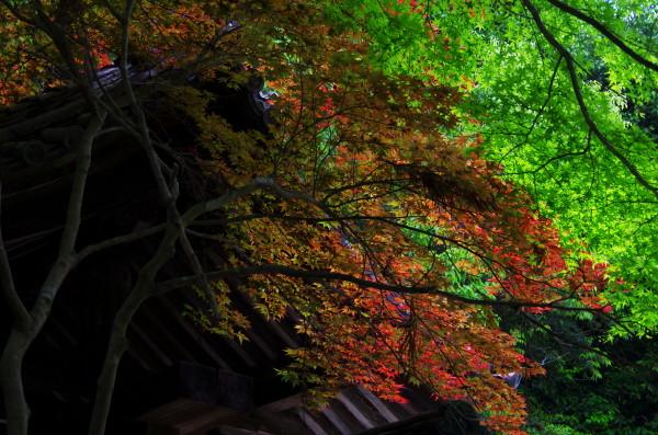 山門の新緑と紅葉