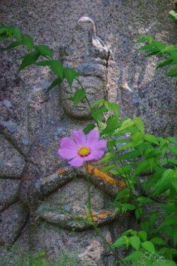 春コスモス.と石仏1