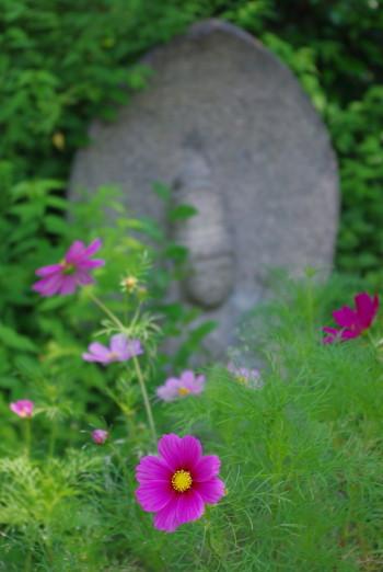 春コスモス.と石仏