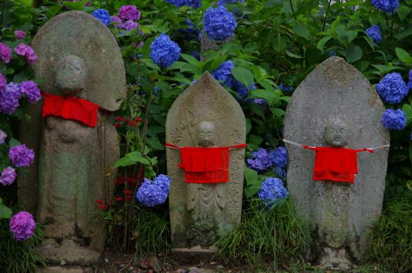 矢田寺 地蔵と紫陽花