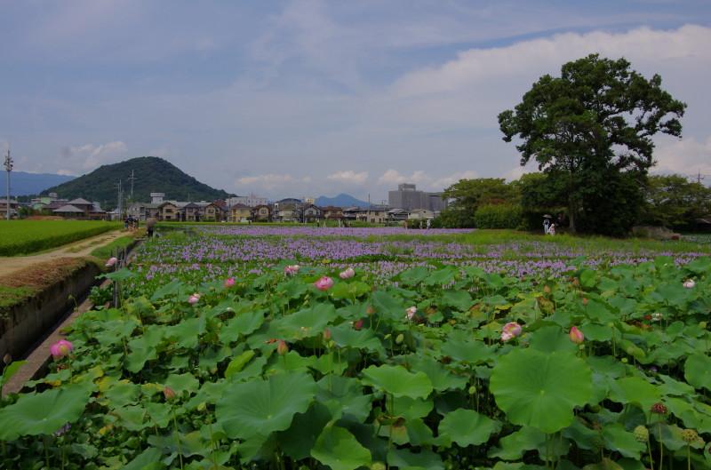 元薬師寺2