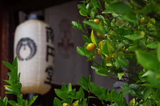 南円堂 橘の実