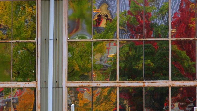 天理 窓の紅葉
