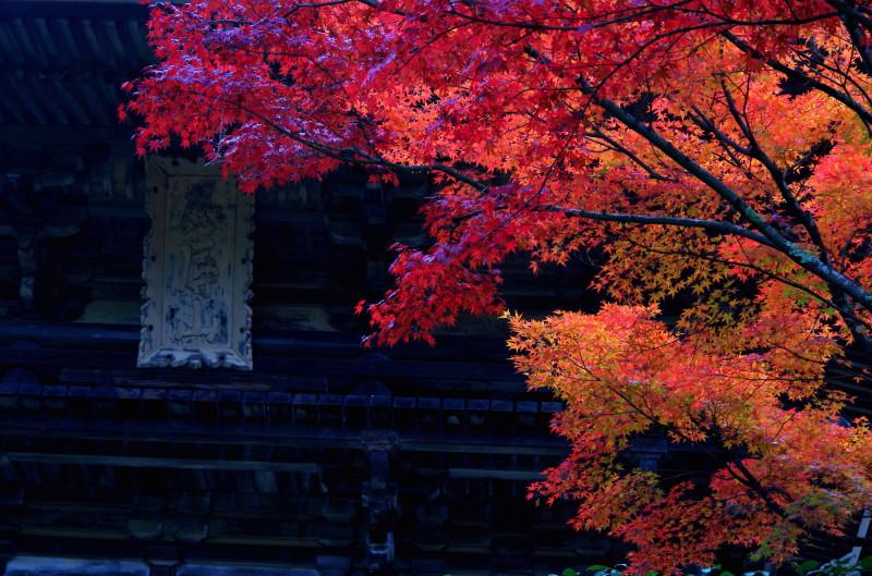 庭 園成寺 紅葉4