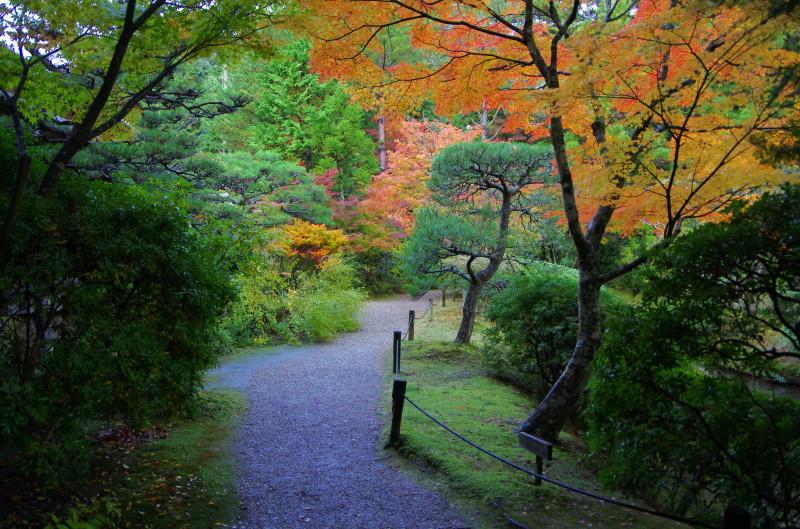 庭 園成寺 紅葉1