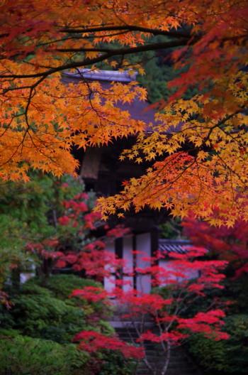 庭 園成寺1