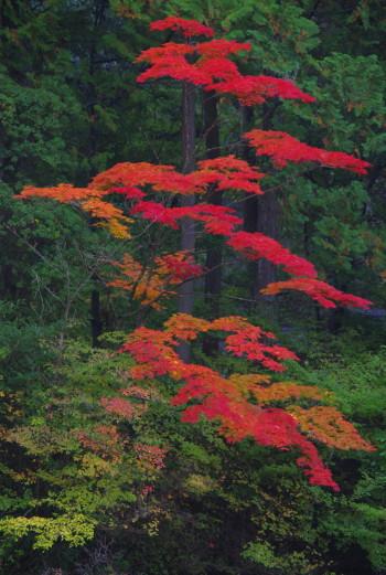 庭 園成寺 紅葉9