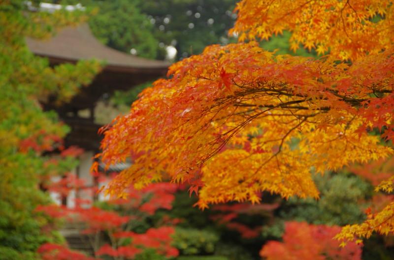 庭 園成寺