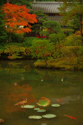庭 園成寺 紅葉8