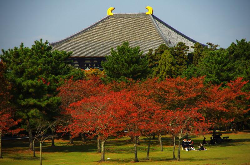 桜モミジと大仏殿2