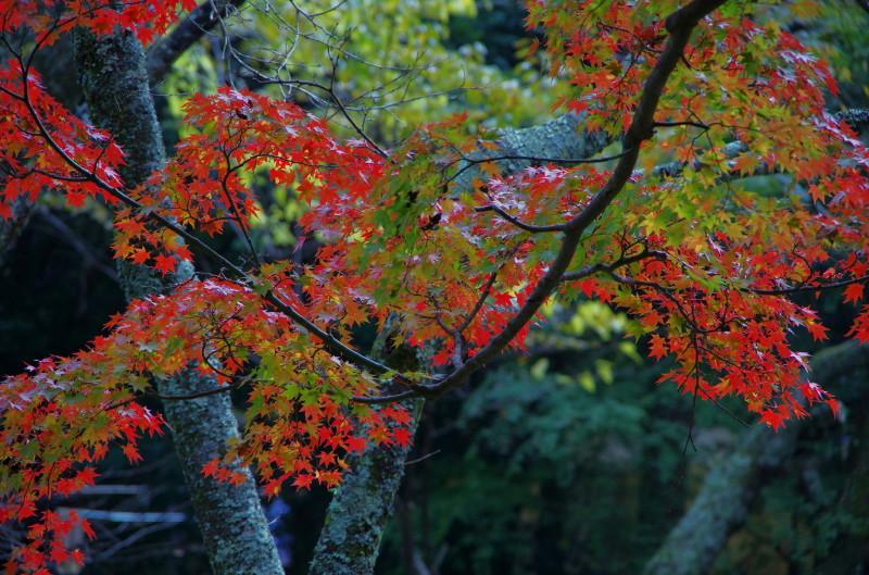 談山神社 紅葉5