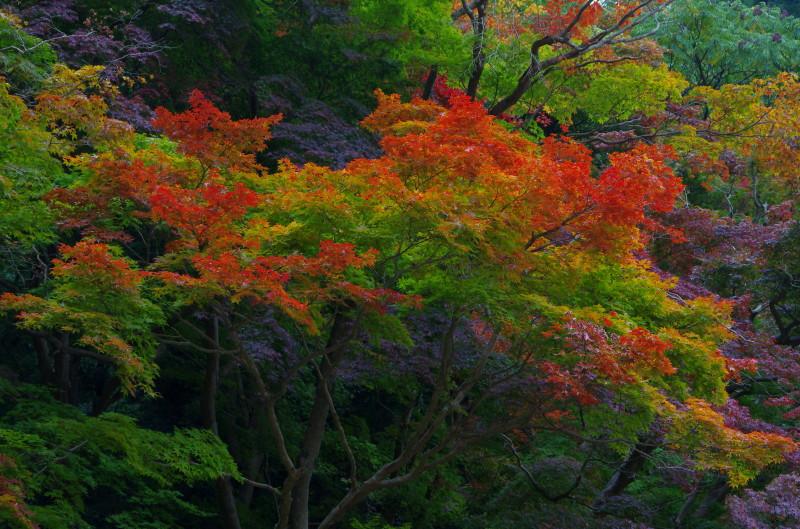 談山神社 紅葉2