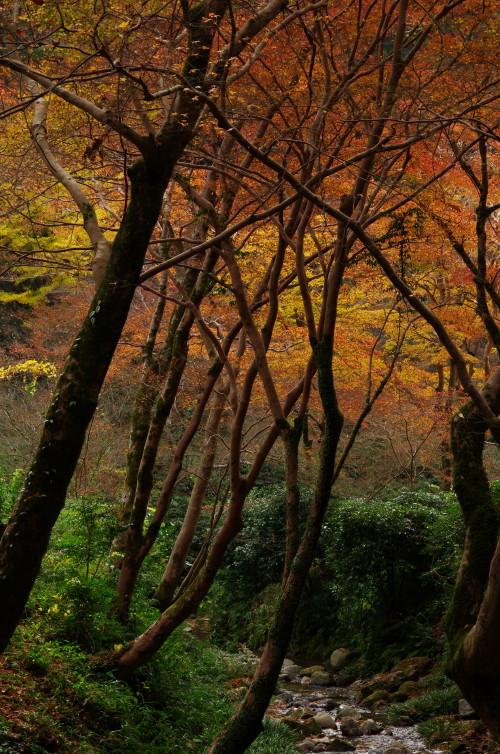 正暦寺 渓流の紅葉