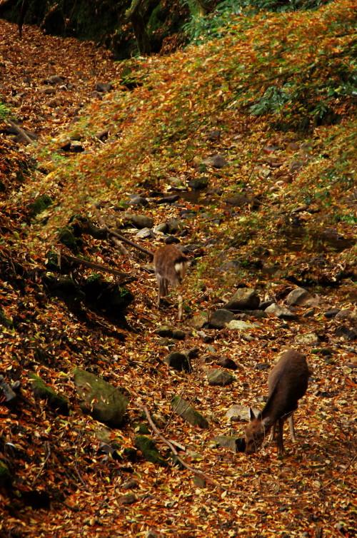 水谷神社鹿保護色