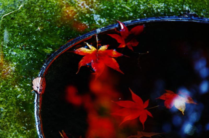 高鴨神社 天水石桶2