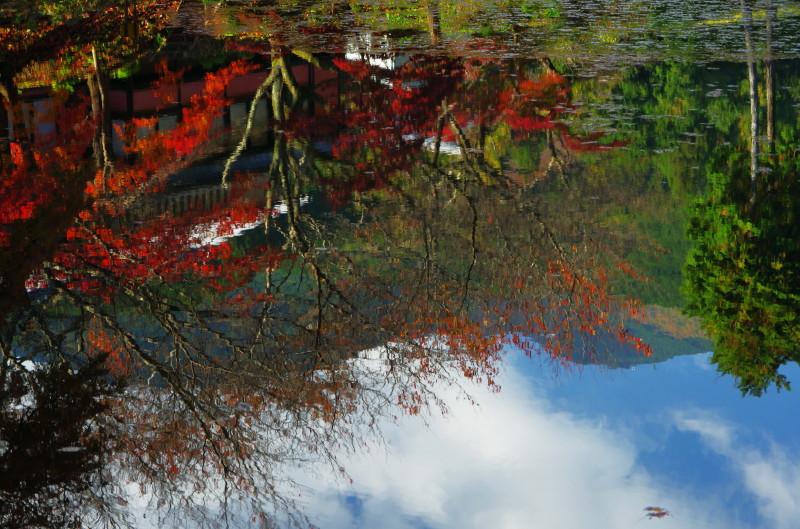 高鴨神社 池に映る紅葉と葛城山