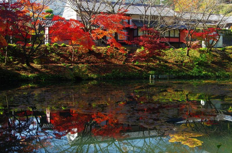 高鴨神社 池に映る