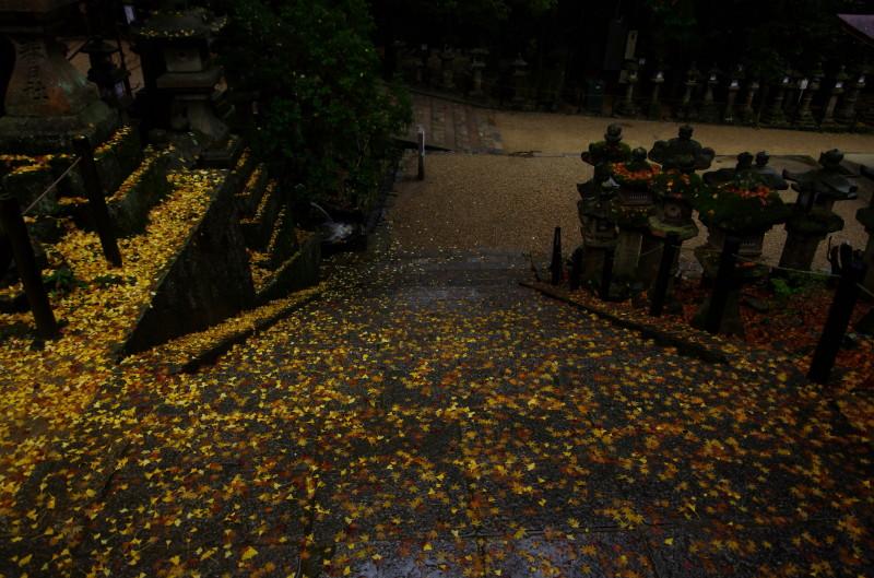 春日大社 石段の落葉