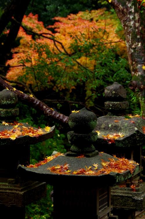 春日大社 灯篭の落葉2