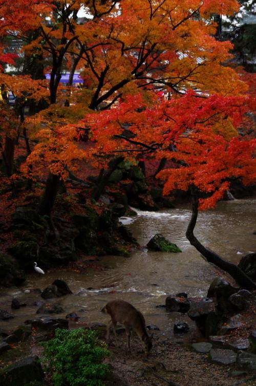吉城川鹿と鷺と紅葉