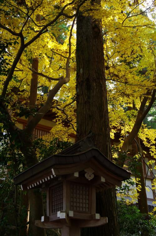 大神神社 灯篭と楓