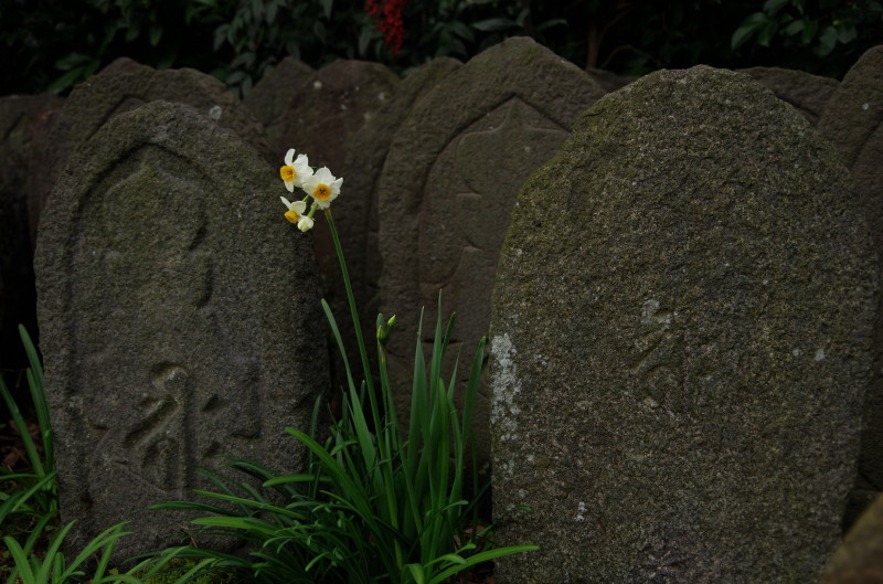 元興寺 水仙と石仏