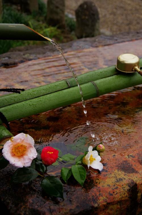 元興寺 手水の山茶花