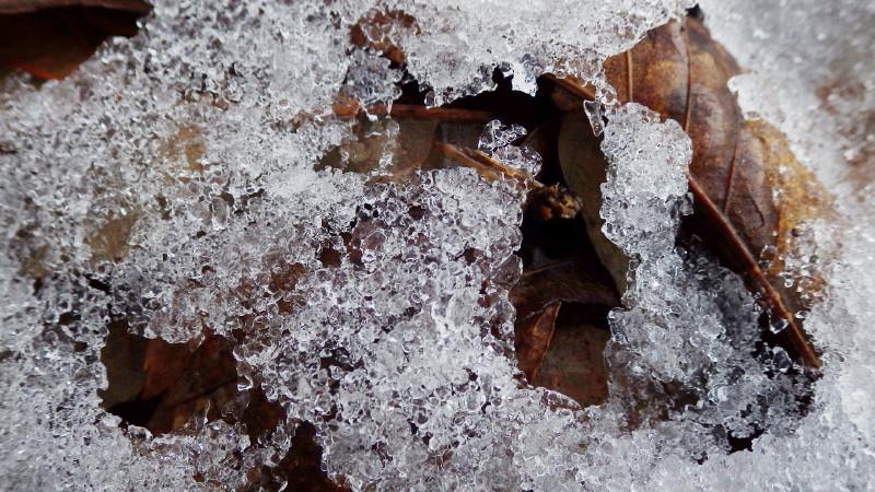 残雪と落ち葉_1