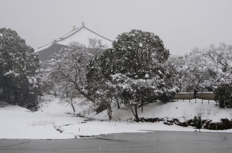奈良公園 大仏池0