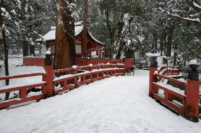 奈良公園 水谷橋と鹿