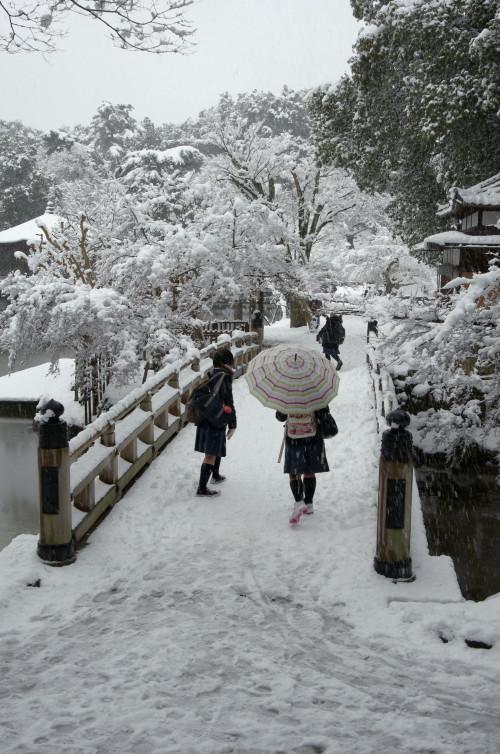 奈良公園 修学旅行生