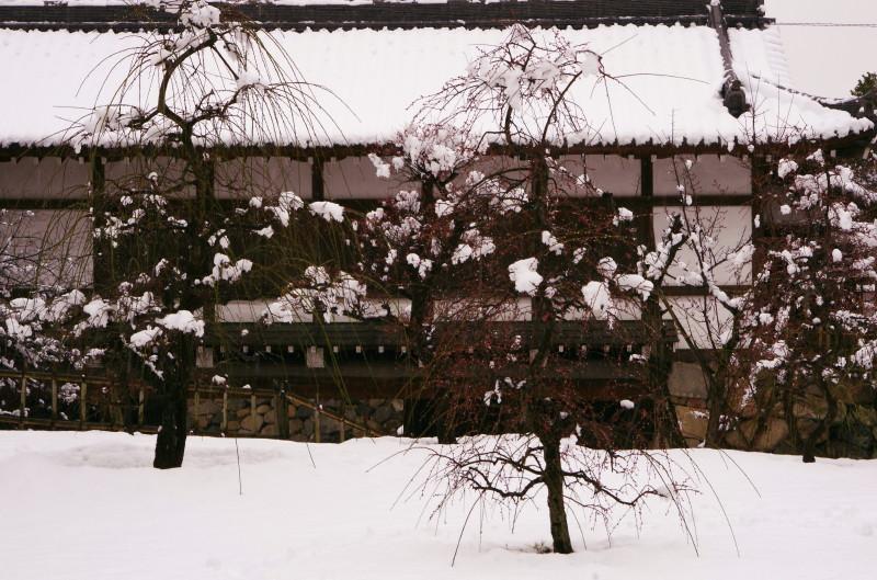 郡山城 黒門と枝垂れ梅