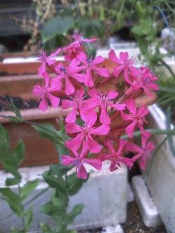 5-22花