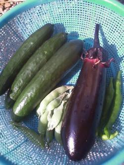 6-17収穫